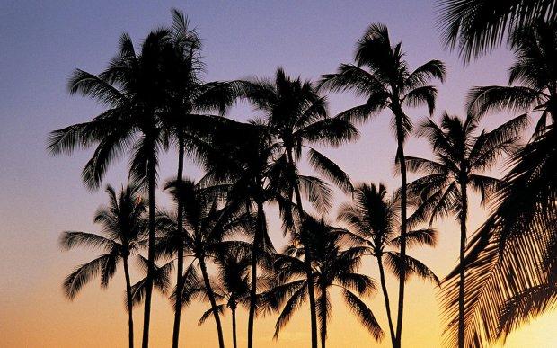 jean paul gaultier classique perfume bereshit בראשית מלון hotel mitzpe ramon מצפה רמון palm tree עצי דקל