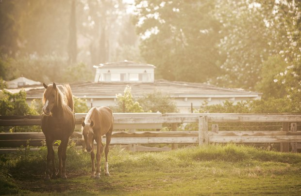 maskit-liman-boutique-hotel-horses